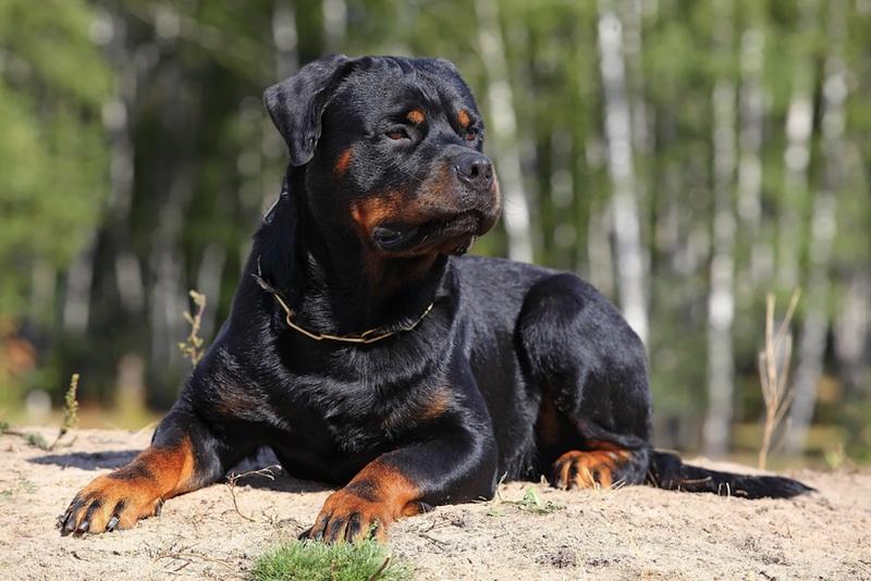 CBD for Dogs Aggression